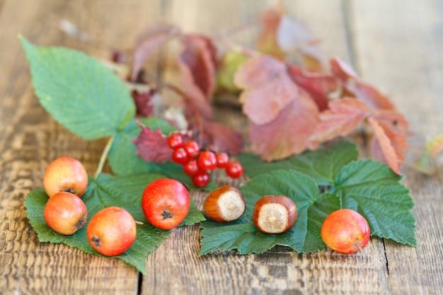 호손, 헤이즐넛, 가막살나무 가지, 녹색 및 붉은 잎이 나무 판자에 있는 가을 정물