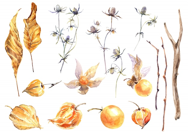 Autumn stories watercolor set. physalis and feverweed watercolor set.