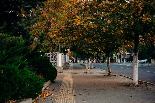 녹색 침엽수 덤불과 노란 잎을 가진 나무 가을 거리. 보도에는 촉각 타일 라인이 있습니다.