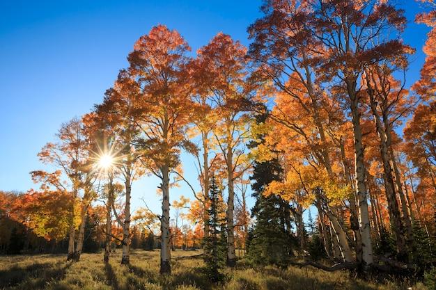 Autumn sunburst landscape in dixie national forest utah