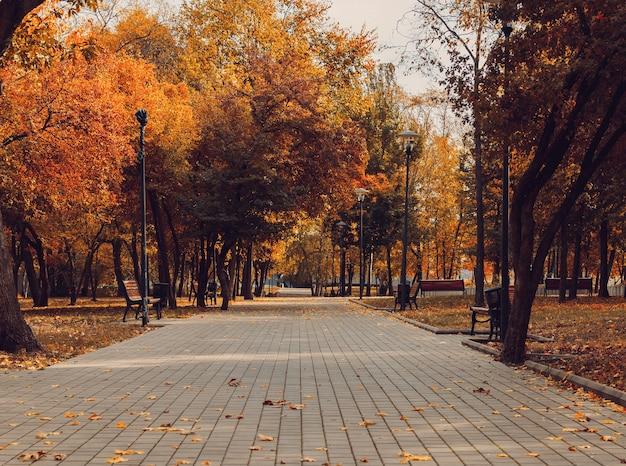 秋の日当たりの良い風景。デザイン用のベンチがある公園内の道路。
