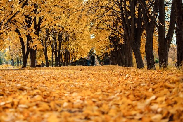 秋の日当たりの良い風景。晴れた10月の日、公園の地面に木々や落ち葉のある秋の公園への道。デザインのテンプレート。スペースをコピーします。