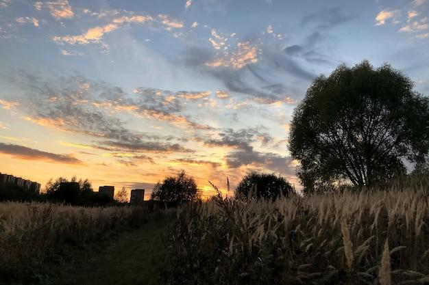 フィールドに乾いた草と秋の夕焼け空の風景