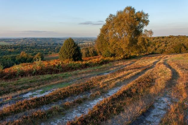Ashdown forest를 밝히는 가을 햇살