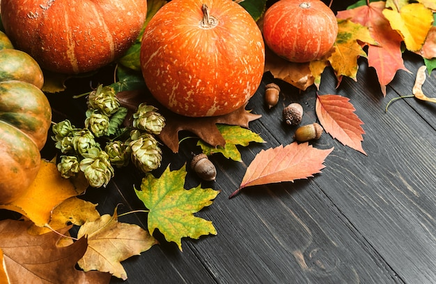 Autumn surface with pumpkins, autumn leaves, hops and oak acorns lying on a black wooden surface
