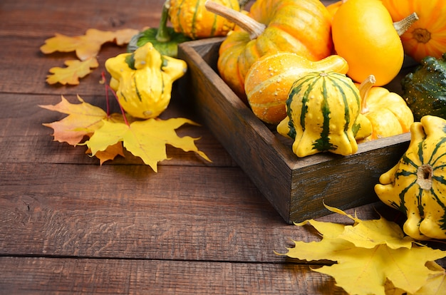 Autumn thanksgiving composition with assorted mini pumpkins in wooden tray on a wooden table
