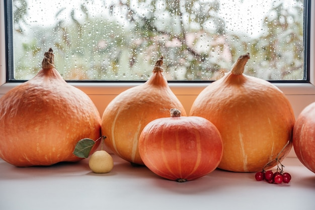Autumn thanksgiving composition with pumpkins guelder rose and wild pear on the windowsill