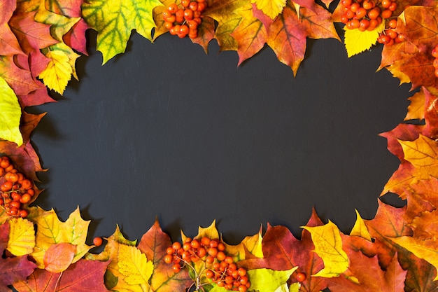 Autumn theme with maple leaves on black. copy space.