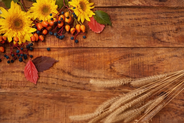 Autumn theme. wooden background with sunflower flowers, berries spikelets and leaves. place for text, frame. autumn texture. copy space, flat lay, layout
