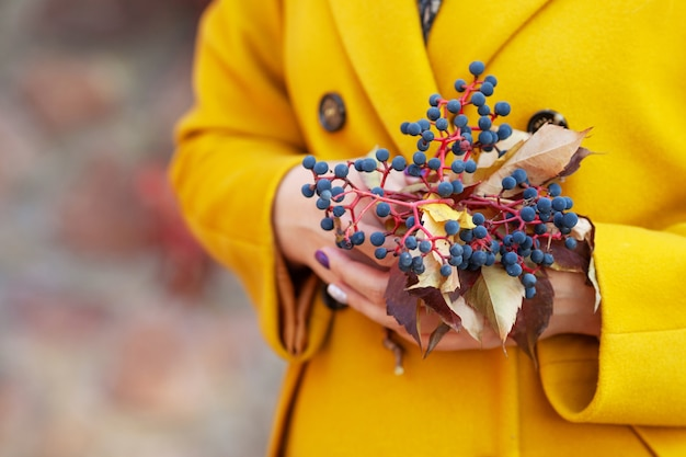 Autumn time. women 's hands holding a bouquet of leaves and berries of maiden grapes. close up image. copy space