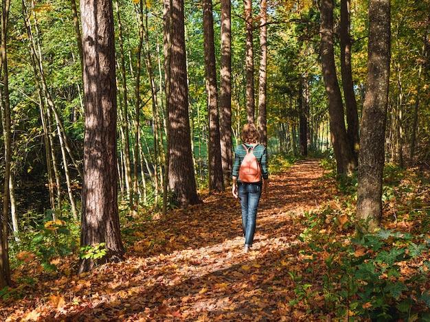 日当たりの良い森の秋のトレイル。秋の森でバックパックを持ってハイキングする女性旅行者。旅行ライフスタイルコンセプトアドベンチャー休暇屋外。