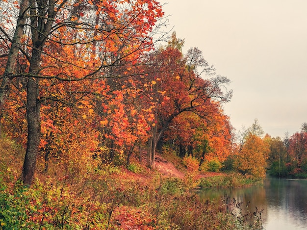 池のそばの秋の木。湖のほとりに赤い木々と朝秋の風景。