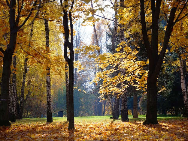 Autumn tree leaf in the park in moscow russia.