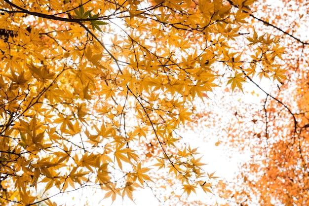 Autumn tree leaves sky background