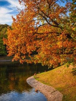 池のカーブバンクにある秋の木。赤いカエデの木と朝秋の風景/