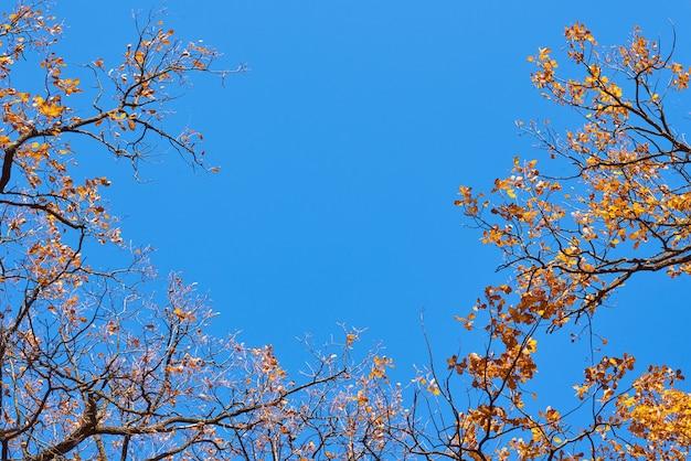 Осеннее дерево с золотыми листьями на голубом небе