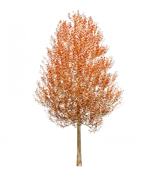 Autumn tree with leaves isolated on white background. 3d illustration