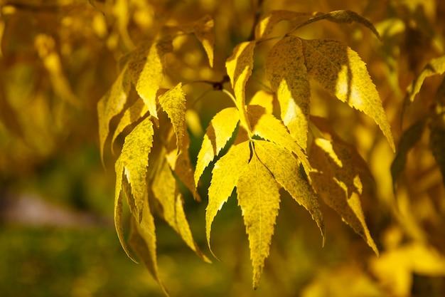 青い空を背景に黄色と緑の葉を持つ秋の木