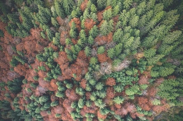 松の間の秋の木