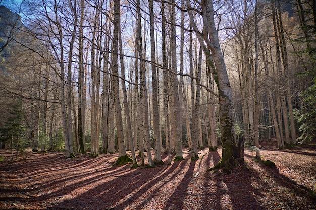 Осенние деревья в национальном парке ордеса, пиренеи, уэска, арагон, испания