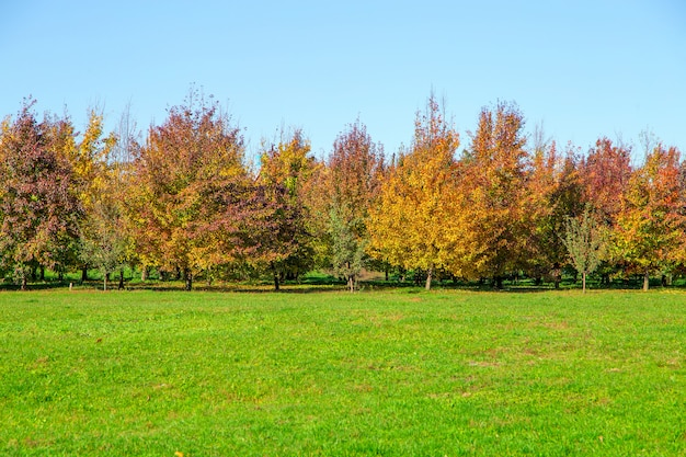 Autumn trees and leaves in sunny day