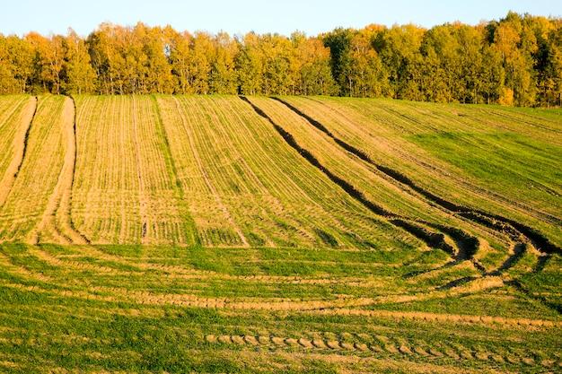 農地近くの秋の木々
