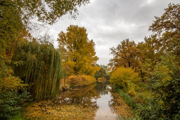 Осенние деревья в пасмурный день в парке с озером.