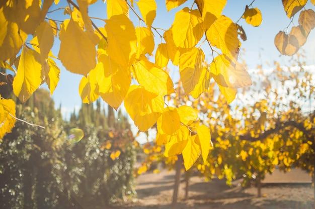 태양에 가을 나무