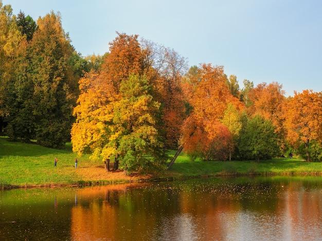 池のほとりにある秋の木々。赤い木々と明るい秋の風景。パブロフスク。ロシア。