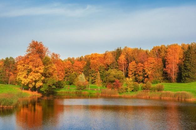 池のほとりにある秋の木々。赤い木々とパノラマの秋の風景。パブロフスク。ロシア。