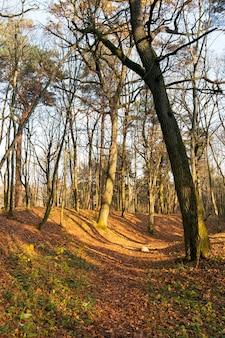 色が変わる葉が地面に落ちた秋の木