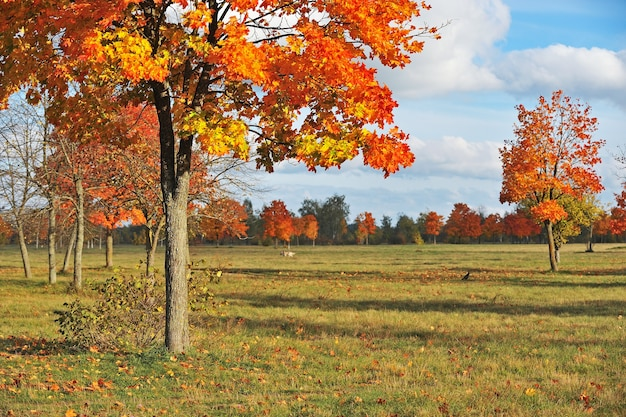 Осенние деревья с золотыми листьями в красочном парке, голубое небо с белыми облаками