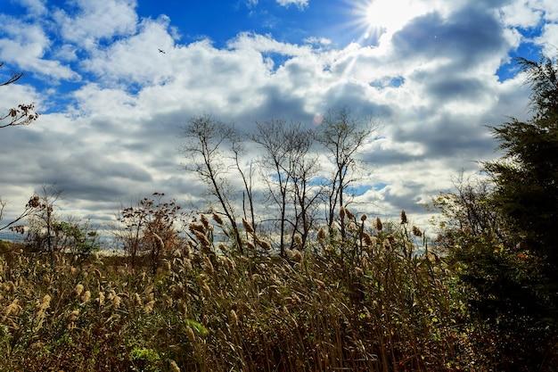 Осенние деревья без листьев, голые ветки деревьев дуб на фоне неба.