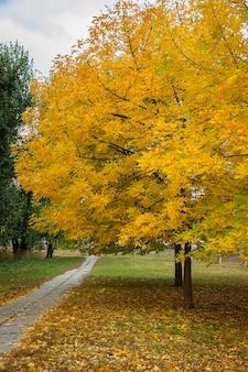 Осенние деревья, желтые листья на деревьях, осенний пейзаж, осенний парк, золотая осень
