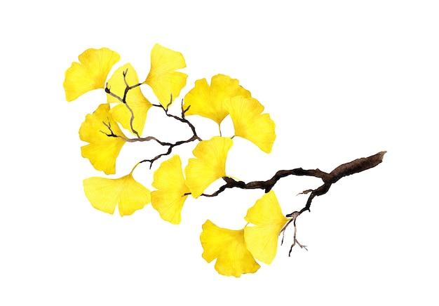 黄色の葉と秋の小枝。水彩イラスト