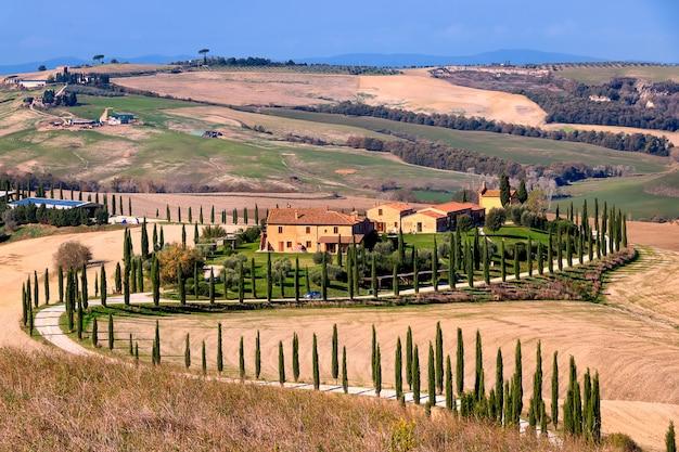 秋の谷、農家、ヒノキの路地。黄金の秋。ヴァルドルチャ。シエナ。トスカーナ。イタリア。ヨーロッパ