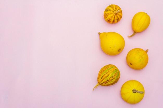 秋の野菜の上面図