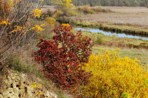 黄金色の秋の植生に囲まれた川沿いのマホガニーの木のある秋の景色。絵のように美しい秋の風景