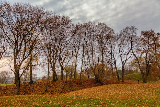 Autumn view with almost bold trees and dull clouds in the sky, in the tourist and archeological village kernave near vilnius, lithuania