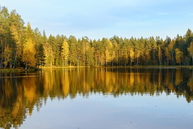 일몰 노란색 나무에 숲 호수와 맑은 물에 반영 맑은 푸른 하늘 가을 보기