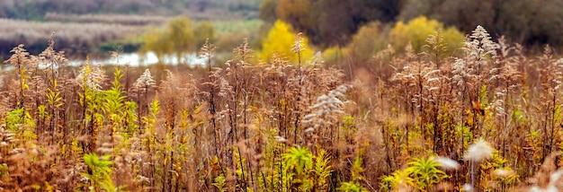 川、パノラマを背景に野草の茂みと秋の景色