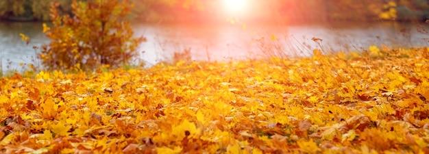Осенний вид с желтыми кленовыми листьями на земле в лесу у реки