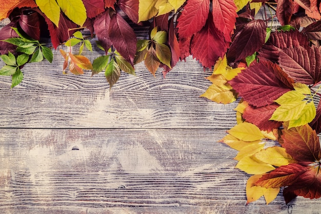 나무 판에 잎가 빈티지 배경