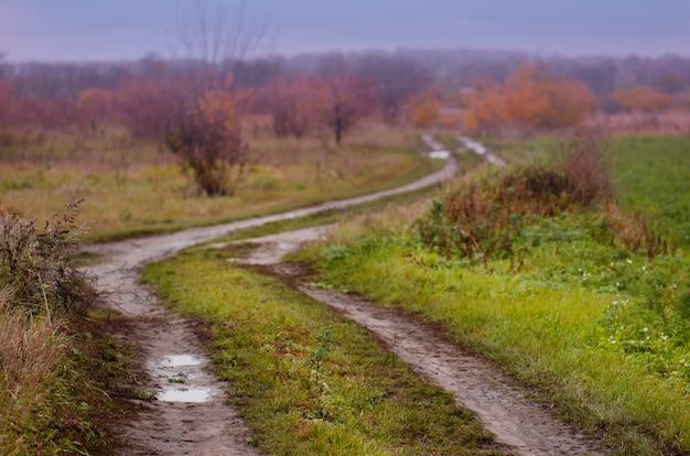 森の中の古い道で秋の散歩。日没時の道路と秋の風景。初秋