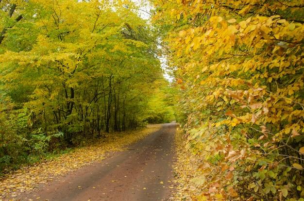 森の中の古い道で秋の散歩。日没時の道路と秋の風景