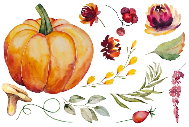 Autumn watercolor collection with pumpkin, leaves, berries, mushrooms and flowers isolated set