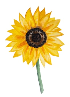 Autumn watercolor collection with yellow sunflower isolated