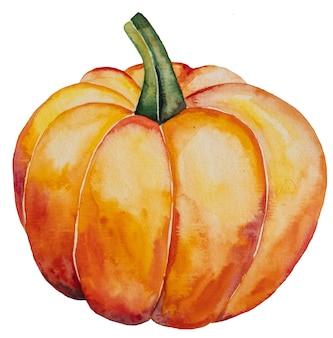 Autumn watercolor  orange pumpkin isolated illustration