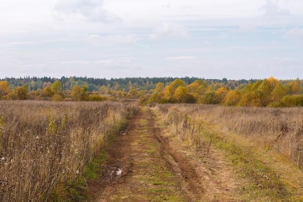 森に続く畑の秋の濡れた道。自然のある広場