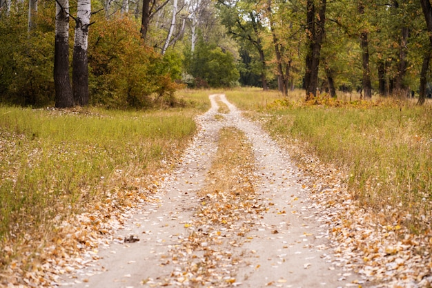 Autumn wild forest. well-trodden path, fallen yellow leaves and yellowed grass